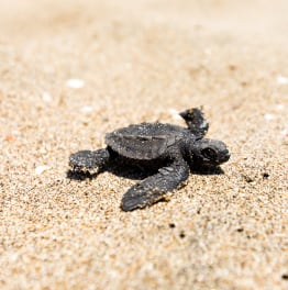 Cherish this Turtle Sanctuary Experience