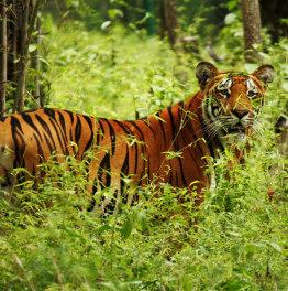 4-Day Chitwan National Park Wildlife Safari