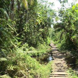 Traverse the panoramic Rwenzori Mountains