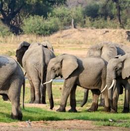 Enjoy Wildlife Safari in Vast Wilderness Areas of East Africa