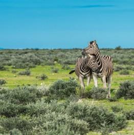 Explore Namibian wonders