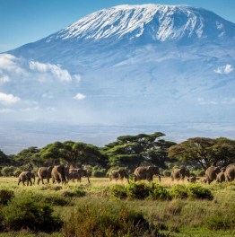 Jumbo Safari in South Kenyan National Park