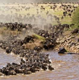Hit the Road for Rift Valley Lakes & Mara