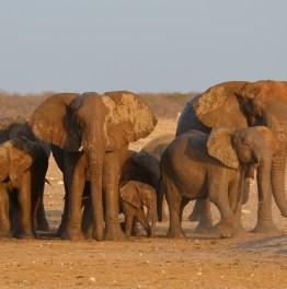Explore Wildlife at Great White plains of Namibia