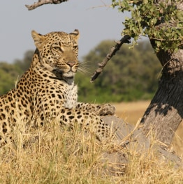 See The Wild Side of an African Safari