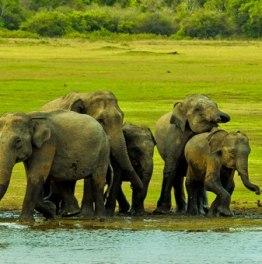 Head for an extensive Sri Lankan adventure