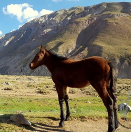 Horseback Riding in Maipo Canyon from Santiago