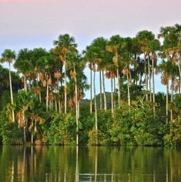 Delve in the True jewel of Amazon Rainforest