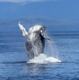 Whale watching tour with bay cruise