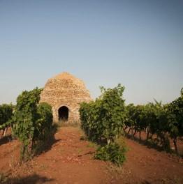 Savor Salento Wine