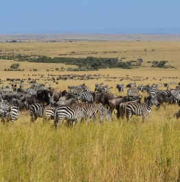 Set off for a game drive in the Kenyan wild