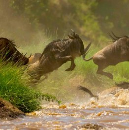 Masai Mara Group Joining Safari