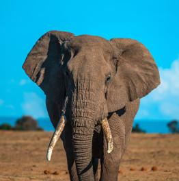 Lake Manyara, Serengeti & Ngorongoro Crater 4-Day Safari Excursion
