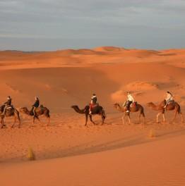 Come across Sahara