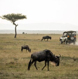 Be a Part of this East Africa Luxury Wildlife Safari