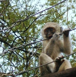 6-Hour Tour of the Monuments & Game Reserve of Gaborone