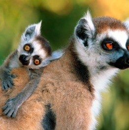 Go for this Tailor-made Wildlife Tour in Madagascar