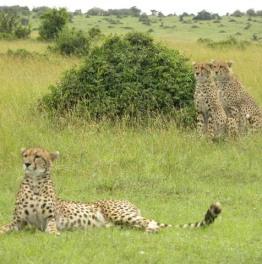 Get Up Close with Wildlife, Nature and Rural Kenya