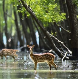 Check Out this Rich Mangrove Forest of Bangladesh