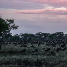Enjoy Game Rides for the Big Five