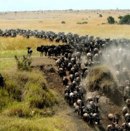 Safari in the famous national reserve