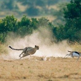 5-Day Masai Mara Safari Tour