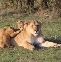 Take The Quintessential Kenyan Safari
