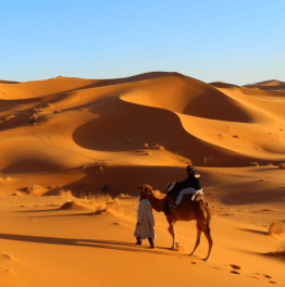 Witness the Barren Beauty of the Sahara Desert