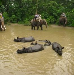 3 Day Chitwan National Park Safari Tour From Kathmandu