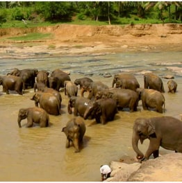 Explore with Buddhist temples & elephants