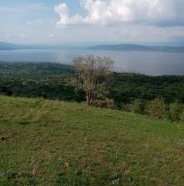 Track Down Wildlife of Kenya