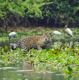 4-Day Excurison to North Pantanal from Cuiaba