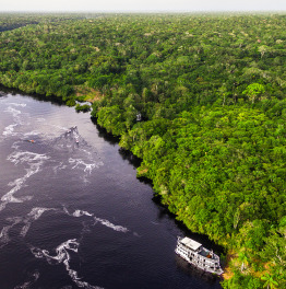 Traverse the Forests of Amazon