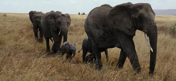 Plan the Perfect Tanzanian Safari Adventure