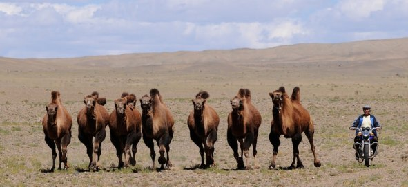 Unique experiences you can only have in Mongolia