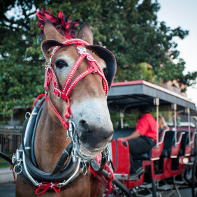 royalcarriages-neworleans-tour-operator
