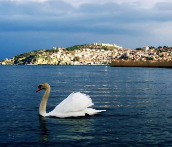 Swan and the city behind