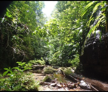 Primary Rainforest