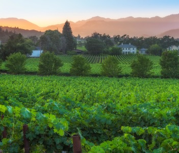 Sunset in the Napa Valley in St. Helena USA