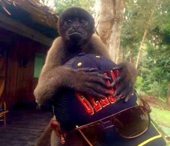 Macaco Barrigudo