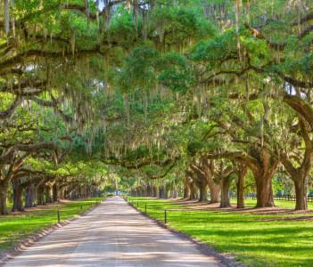 Tree Lined Plantation Entrance, Charleston, South Carolina, USA