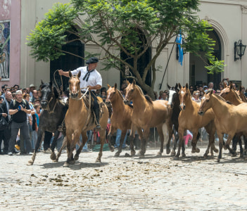 Gaucho (South American cowboy is a resident o the South American pampas) drives a herd of horses through the town center during the Traditional Gauchos Feast (spanish - Fiesta de la