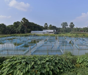 Net cages set in the cannel to cultivate fish at Comilla Bangladesh
