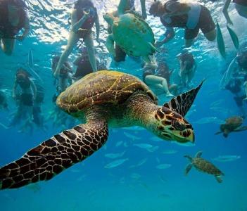 playing with turtles in hanga roa bay