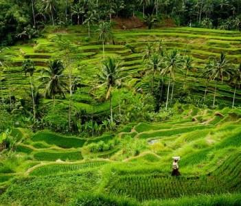 Rice Terraca at Tegalalang