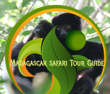 http://madagascarsafaritourguide.wordpress.com
