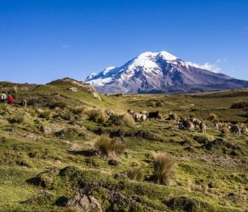Chimborazo volcano and sheep on the moor Andes, Ecuador.