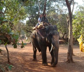 Elephant Safari Goa