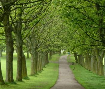 Woodhouse Moor