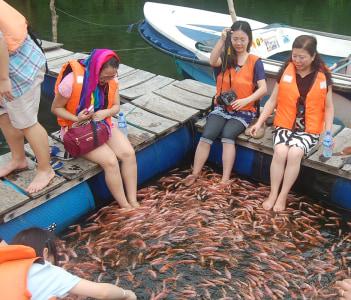 FISH THERAPY -MADHU RIVER